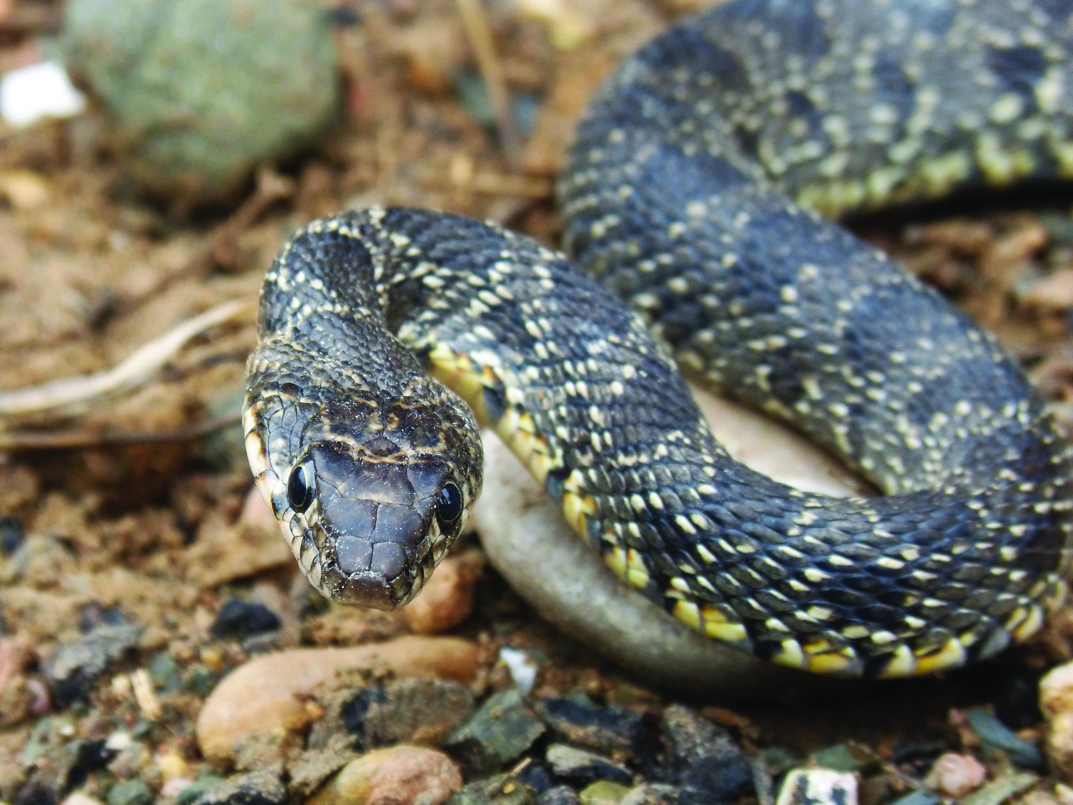 snake-1803700